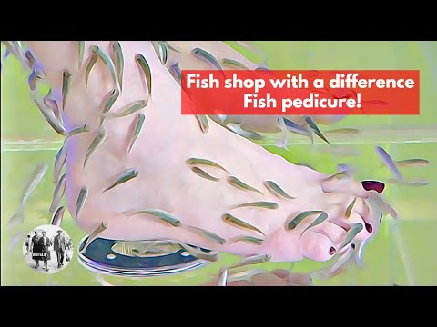 Fish shop with a difference – Fish pedicure!
