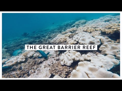 Visiting The Great Barrier Reef | Kat's Travels