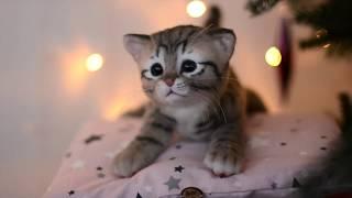 New year kitten - more than toy. Реалистичный котенок - больше, чем просто игрушка