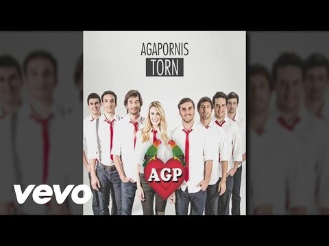 Agapornis - Torn