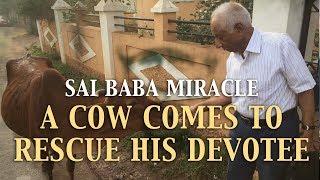 Shirdi Sai Babas Biggest Devotee – Grcija