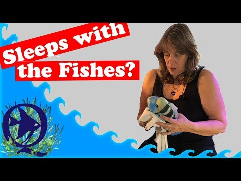 Sleeps with the fishes no more