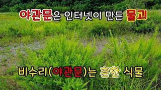 야관문은 인터넷이 만들어낸 물괴 / 비수리는 흔한 식물