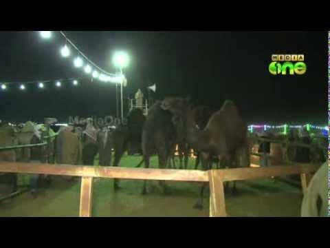 King Abdulaziz Award Festival for Camels ends