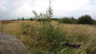 Охота на вальдшнепа с собакой в Воронежской области