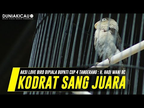 PENDATANG BARU! KODRAT Tampil KONSLET Di Piala Bupati Cup 4 Tangerang