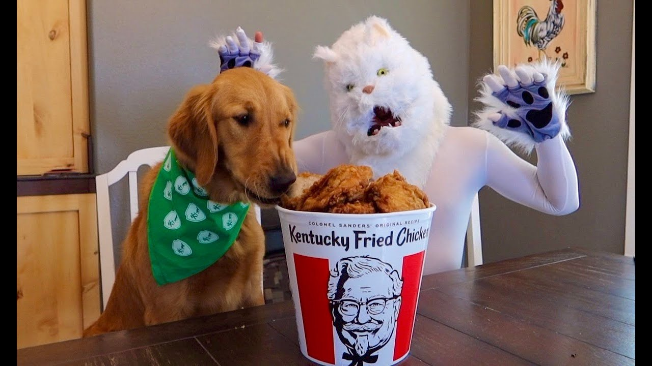 Cat Leaves Dogs Alone with KFC Chicken