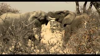 Tuli Safari Lodge, Botswana - lodge, scenery, wildlife