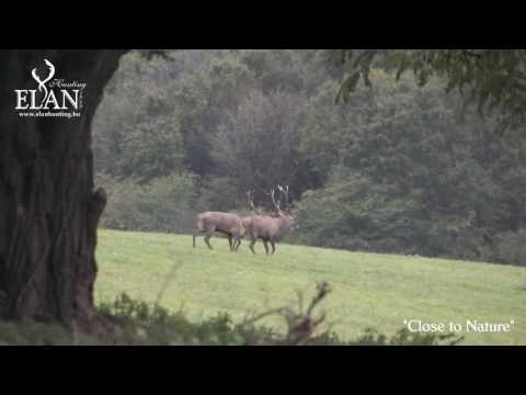 Red Deer Hunting In Hungary