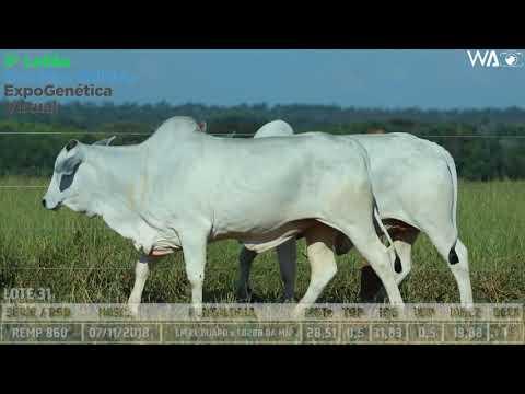 LOTE 31 - DUPLA - REMP 860, REMP 990 - 3º Leilão Genética Aditiva Expogenética 2020