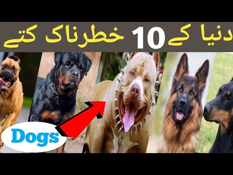 top-10-dangerous-dog-in-world-|-dangerous-dogs-in-world-|-danger-dogs?