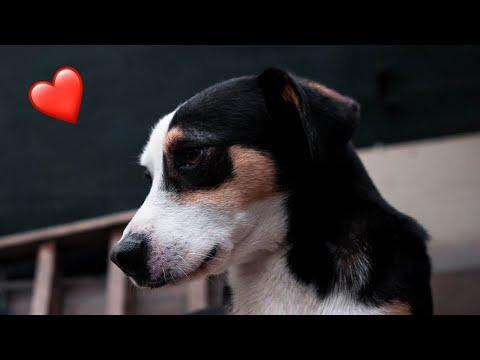 Soft Love Piano Instrumental - Mitchell Grant Remix