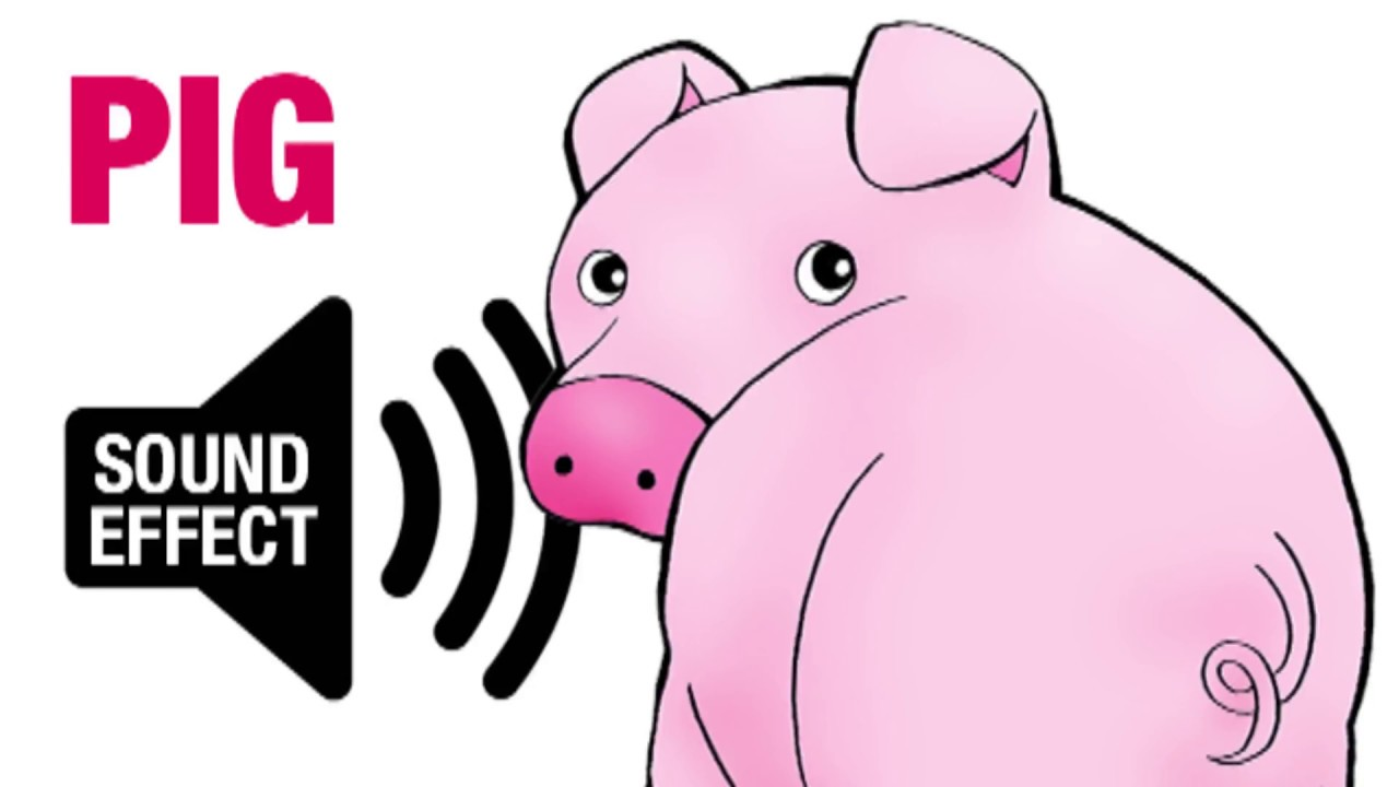 Pig Sound Effect - Oink - YouTube
