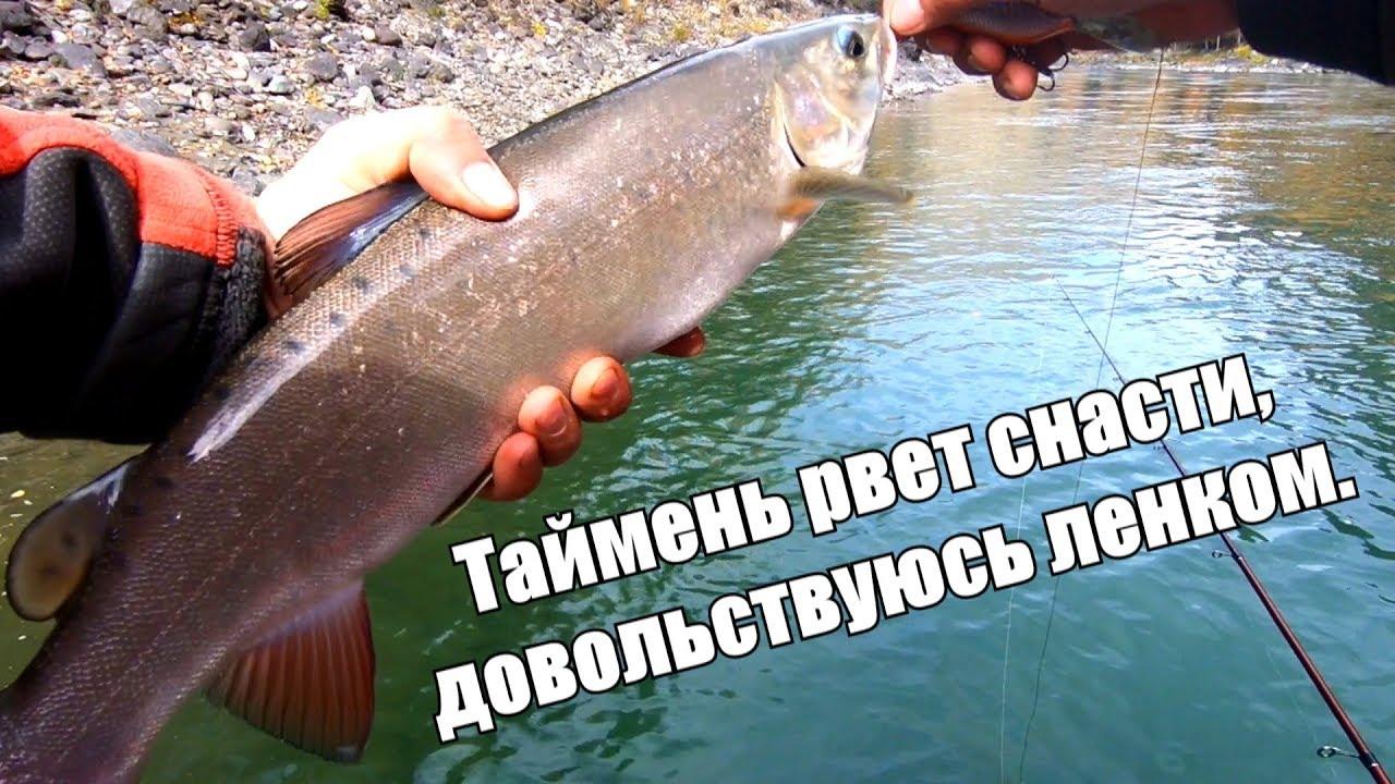 Рыбалка на Алтае - таймень рвет леску/ЛЕНОК, хариус/Штурм реки Аргут на лодках Солар +Tohatsu, Выдра