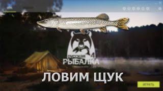 Русская Рыбалка 4 (Russian Fishing) - стрим. Ловим щук.