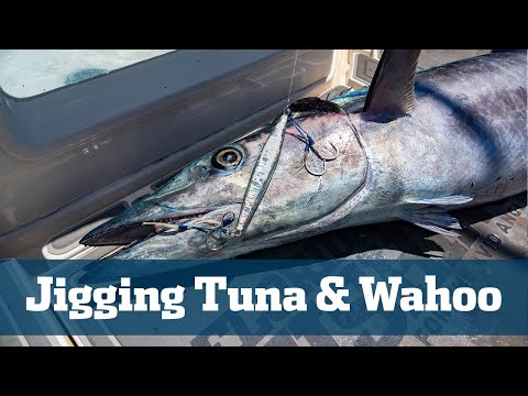 Big Blackfin Tuna & Monster Wahoo - Florida Sport Fishing TV - Hot Slow Pitch Jigging Bite