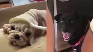 Những chú chó hài hước nhất thế giới | Yêu Pets