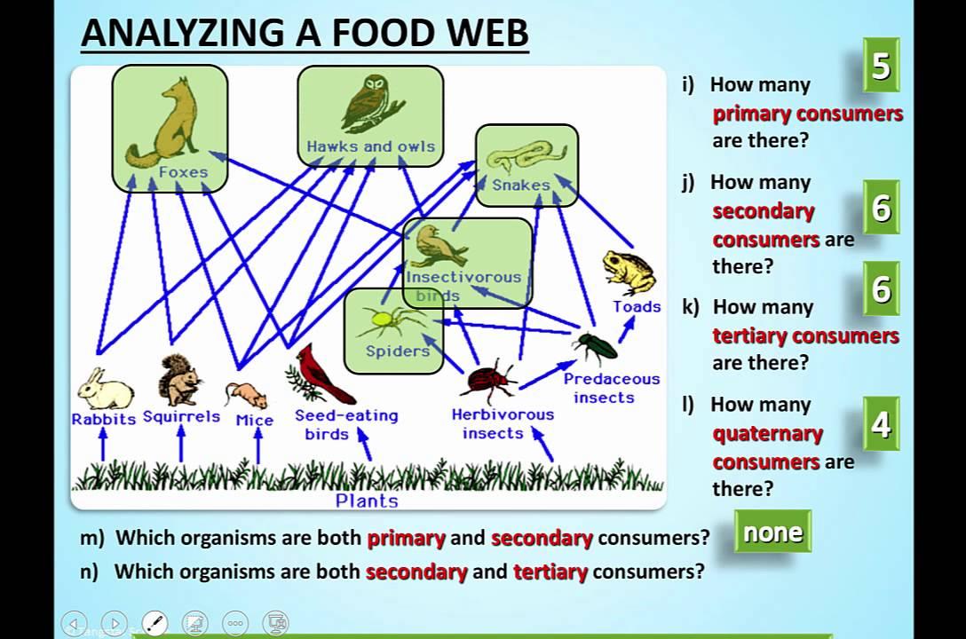 Amoeba sisters food webs answer key