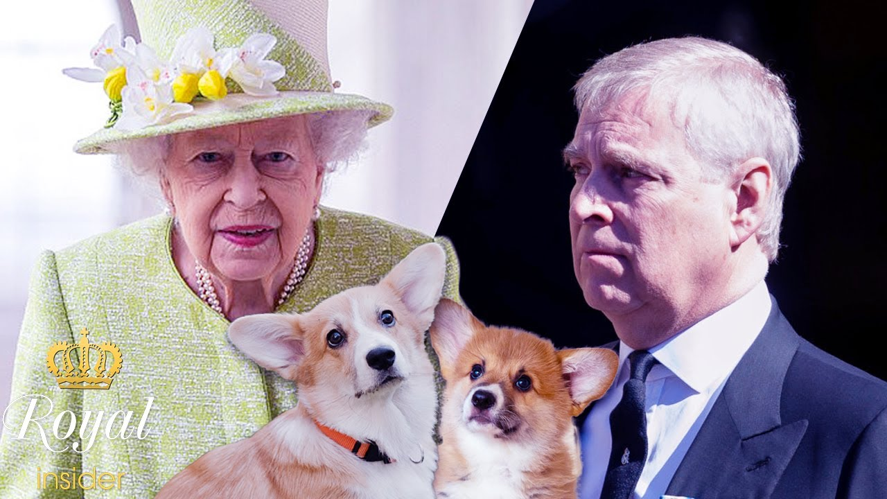 The sad reason Prince Andrew gifted the Queen with new puppies - Royal Insider