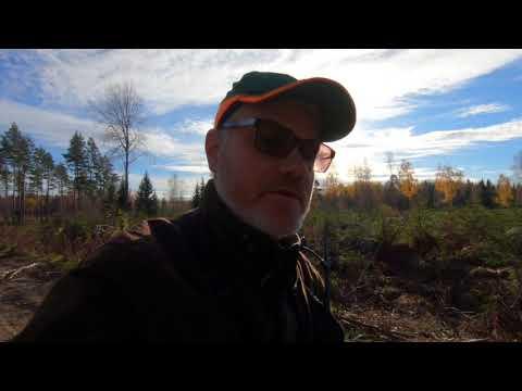 Lyckad efterjakt! - Älgjakt i Bastfallet 2018 - Successful Moose Hunt