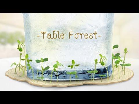 #TableForest สวนจิ๋วบนที่รองแก้ว : สร้างพื้นที่สีเขียวจากหยดน้ำ