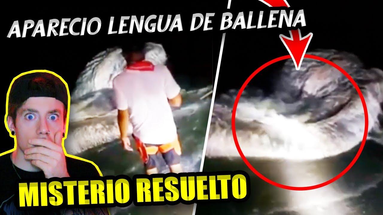 Apareció LENGUA de BALLENA en la playa | Te cuento TODA LA VERDAD ¿Qué es?