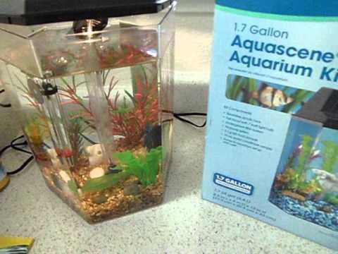 Review on top fin aqua scene 1 7 gallon aquarium youtube for One gallon fish tank