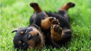 神経質な犬のための音楽をリラックス - あなたの親友のために音楽をリラ...