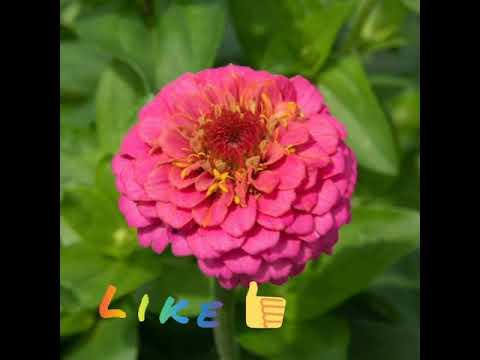 flowers and flowers names #flowers #flowersnames #flowergarden #