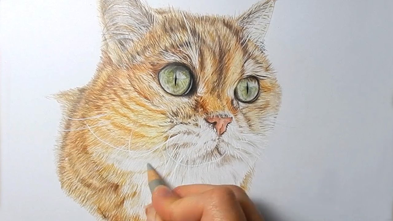 Color of cats fur - Color Pencil Drawing Cat How To Draw Realistic Cat Fur With Colored Pencils Emmy Kalia