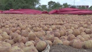 Somalie o Risque de famine: les associations humanitaires mettent en garde