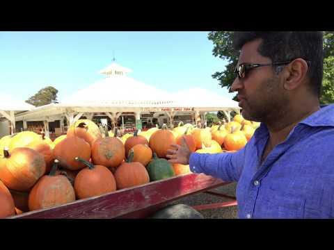 Pumpkin Picking At Harbes Family Farm Long Island