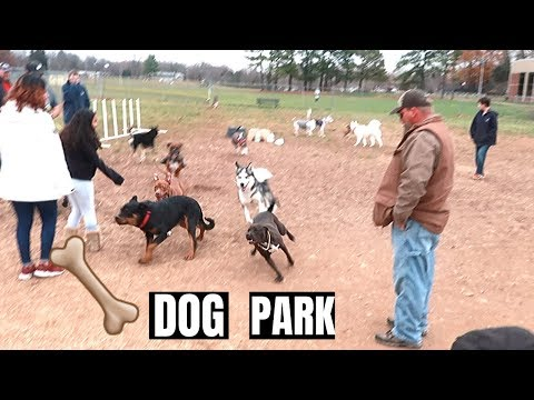 MY PITBULL FIRST TIME AT THE DOG PARK!!!
