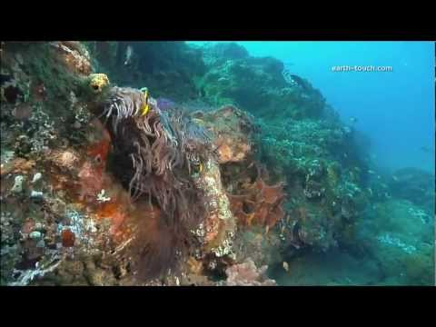 Coral Reefs & Climate Change