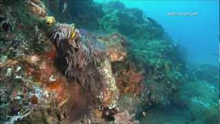 Coral Reefs & Climate Change thumbnail
