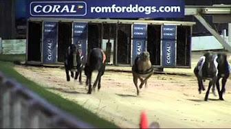 Malwa tv dog racing betting volley live vitibetting