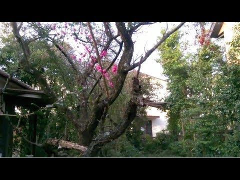 Inside The Japanese Sharehouse (Possibly Former Akiya) I Live In