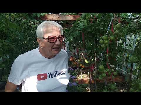 """Мои """"экзоты"""".Обзор и дегустация томатов ."""