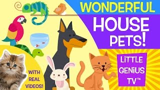 House Pets Videos For Babies Toddlers Kids Little Genius Tv Youtube