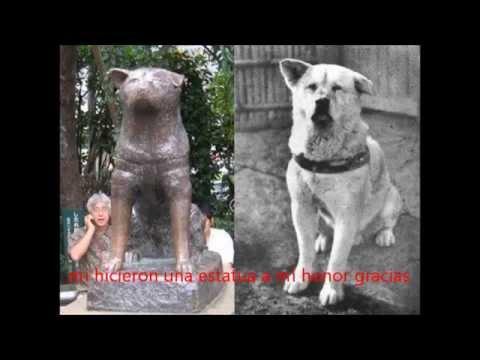 De a perrito le gusta mucho - 1 part 8