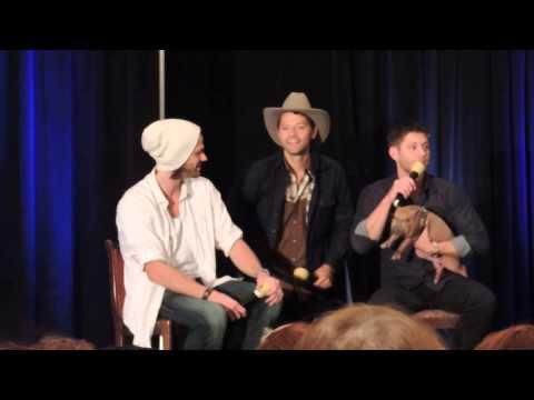 DallasCon '13 Misha Crashes J2's Panel With Icarus The Pig.