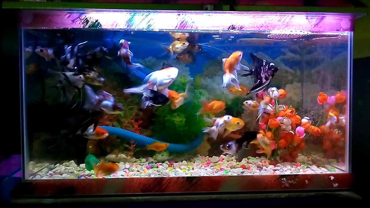 Ikan Hias Aquarium Cantik Youtube