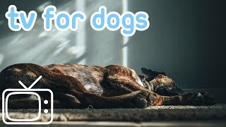 Dog TV: Videos to Help Reduce Dog Anxiety - TV for Dogs and Puppies! thumbnail