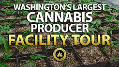 Washington's Largest Weed Facility Tour - Northwest Cannabis Solutions