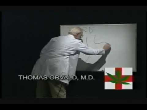 Cannabis Common Sense: Thomas Orvald M.D. Discusses Medical Cannabis and GERD – 350
