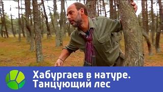Танцующий лес  Хабургаев в натуре   Сезон 3 | Живая Планета