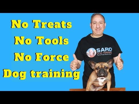 How to train my dog without treats, aversive tools, force or domination