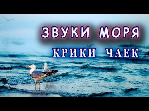 Как поют чайки