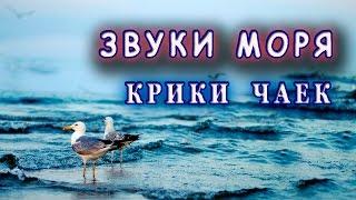 Звуки моря Крики чаек Спокойствие и умиротворение