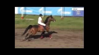 Рекорд Сибири. Лошадь Флорена показала лучший результат за всю историю скачек